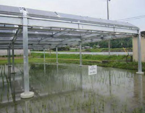 ソーラーシェアリングの稲作の画像