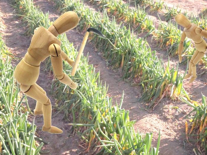 生産緑地の2022年問題の対処法4特定生産緑地として営農代行