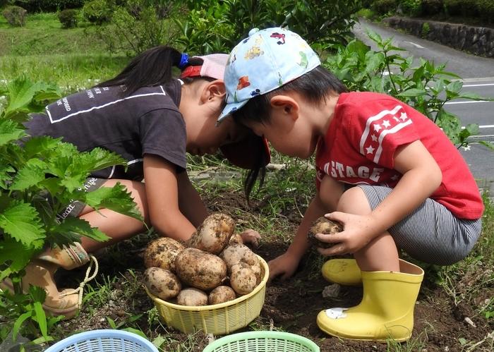 生産緑地の畑で野菜と触れ合う子供たち1