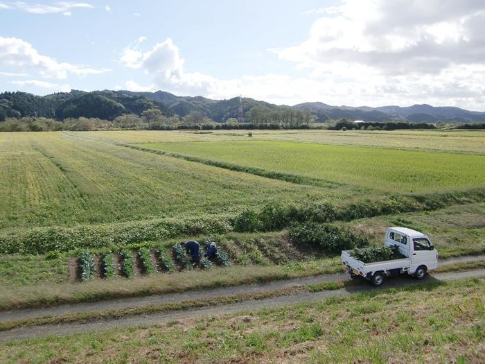 農家が軽トラで農地で移動する図