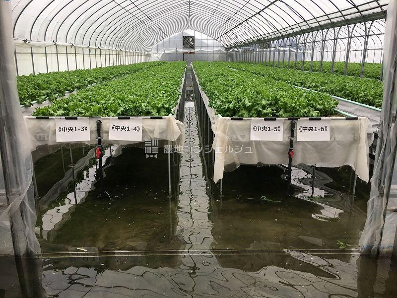 2018年7月近畿地方を中心とした記録的豪雨による浸水