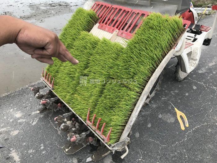 田植え機に苗搭載