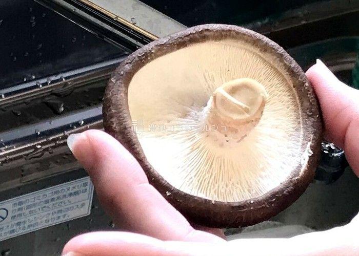 原木しいたけの石焼2