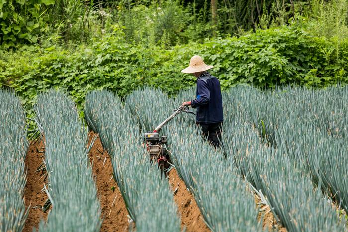 一般的な農業