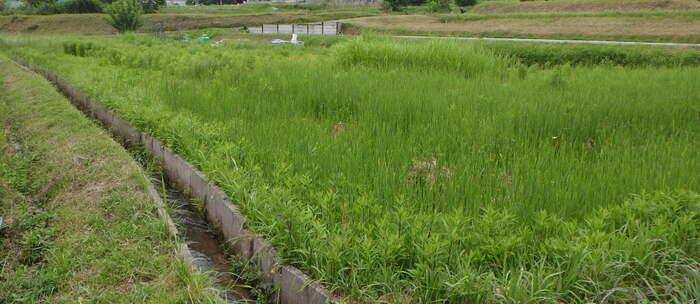 ビフォアー(草刈り前)