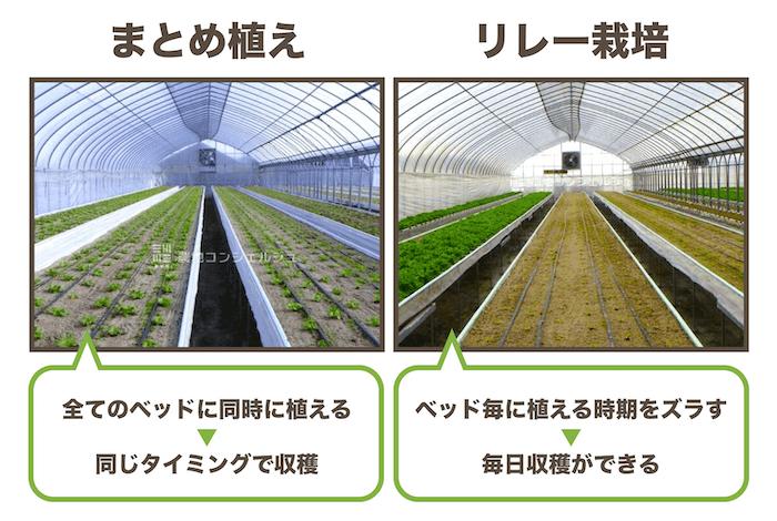 まとめ植えとリレー栽培