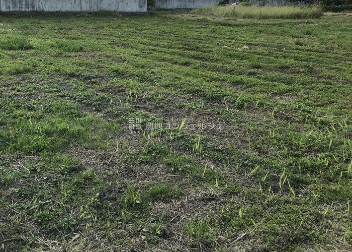 雑草を刈り取った農地