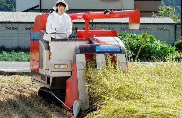 稲刈り 時期 アイキャッチ画像