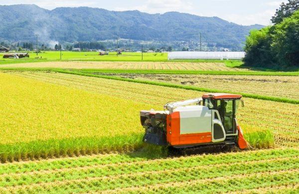 稲刈りアイキャッチ画像