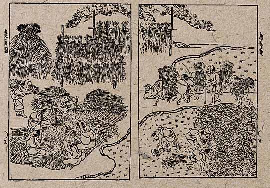 江戸時代の稲刈り風景