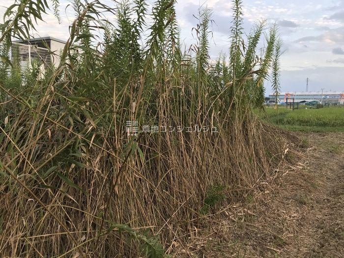 背の高い草