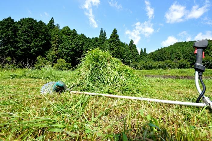刈り倒した雑草